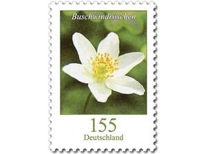 Buschwindröschen, Briefmarke zu 1,55 EUR, 10er-Bogen